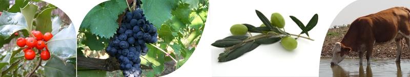 servizi consulente agronomo