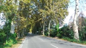 taglio-alberi