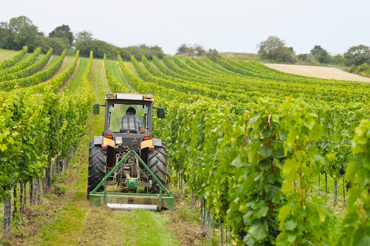 Agricolturaconsulente agronomo consulente agronomo - Agenzie immobiliari francia ...